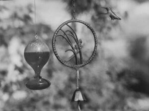 Hummingbird Black & White