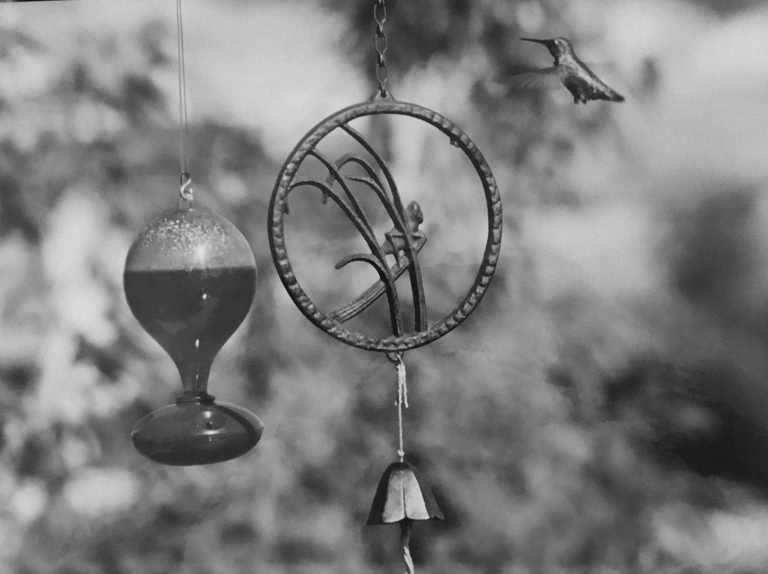 Hummingbird Black & White